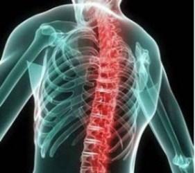 верхняя часть спины