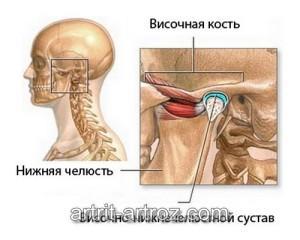 строение височно-челюстного сустава